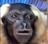 Some sort of username's avatar