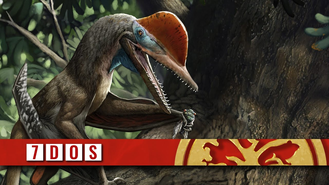 Pterosaur With an Opposable Thumb Discovered | 7 Days of Science