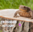 IiCh0c0latte's avatar