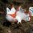 Fishyfrog9845's avatar