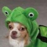Froggo Doggo