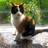TabbyCallie's avatar