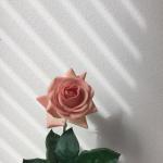 Rosycafe's avatar