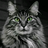Когтегривка's avatar