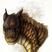 ThrushtheMudwing's avatar