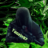 Neb Winter's avatar