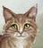 GingerdawnOfFireClan's avatar