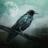 Аватар Corvus Gray