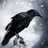 CreeperKid354's avatar