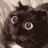 Foxygummybearsssss's avatar