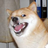 Angerydoge's avatar