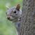 Big Boi Squirrel