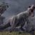 Punkasaurus0530