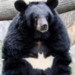 Koraki5115's avatar