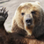 Bearyimportant