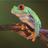 TheZhab's avatar