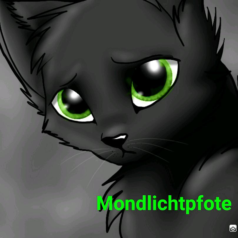 Mondlichtpfote Distelblatt's avatar