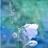 Хрупкий Цветок's avatar
