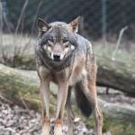 Hyenas45's avatar