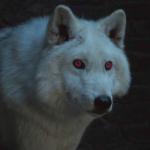 "Ghost""wolf.538's avatar"