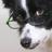 Lazulisheep's avatar