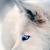 FoxWolf1314