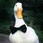 Merpduck's avatar
