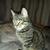 Matroskin the Cat