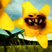 LittlePrettyFlower's avatar