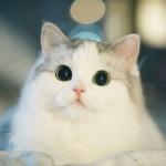 Ivankot77's avatar