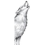 Tikaani vom Discord's avatar