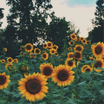 SunnySide45's avatar