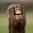 ShotgunLord's avatar