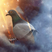 Imrancat's avatar
