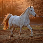 Aurore du Ciel's avatar