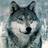 Plume de louve's avatar
