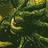 The Many-Angled One's avatar