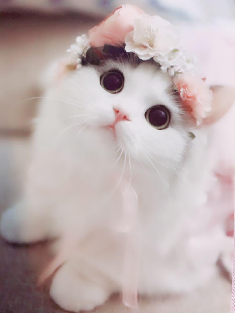 Enchanted kitten