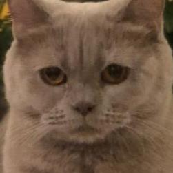 Lana nasser10's avatar
