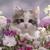 KittyKat12345