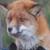FoxKate53thefox