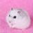 LocoDonutzMinty's avatar