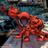 Shoesh's avatar