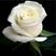 Lala0555's avatar