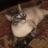 The Cat Master's avatar