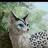 Полёт Сокола's avatar