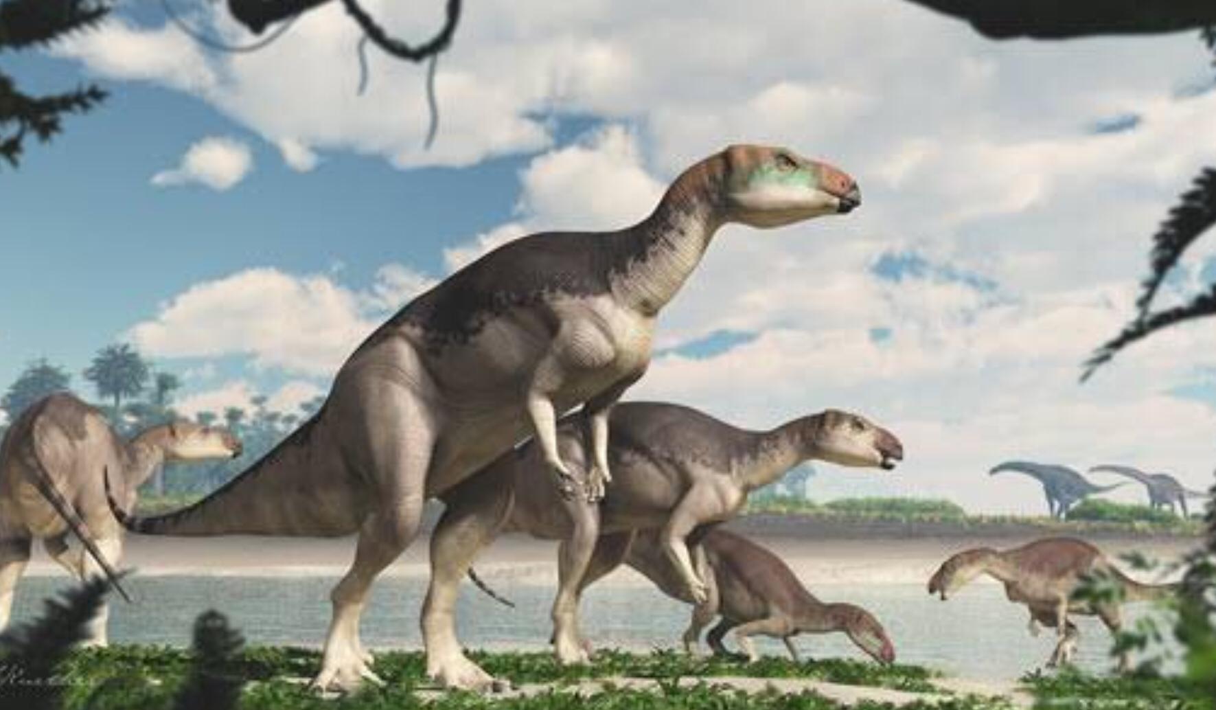 New Dinosaur species found in NSW Australia!