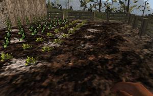 Farming-seedlings.png