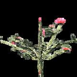 PlantedChrysanthemum3Harvest