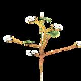 PlantedCotton3Harvest